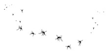 A Flock Of Flying Mosquitoes. ...