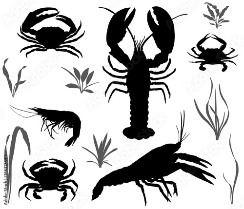 Silhouettes of four species of crustaceans: crayfish, lobster, crab and shrimp Canvas Print