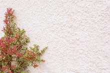 Succulent Green Growing Plants And Other Flowers On White Wall With Copy Space