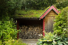 Firewood Storing House Overgrown With Nature.