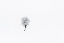 Barren Tree On Snowy Field