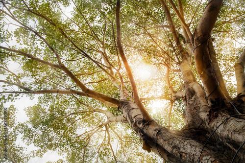 wielkie-drzewo-widok-wielkiego-drzewa-i-slonca