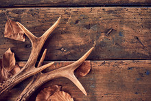 Rustic Deer Antlers And Fallen...