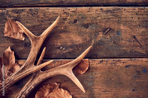 Poster Chasse Rustic deer antlers and fallen brown leaves