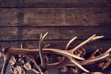 Composition Of Deer Antlers With Dry Leaves