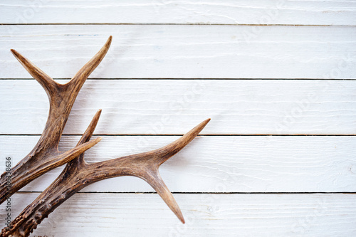 Poster Chasse Stag antlers on rustic white timber background