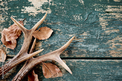 Photo Vintage stag antlers and leaves on timber