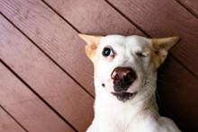 The Cute Thai Dog And One Eye