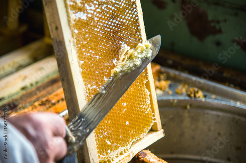 Photo The beekeeper separates the wax from the honeycomb frame.