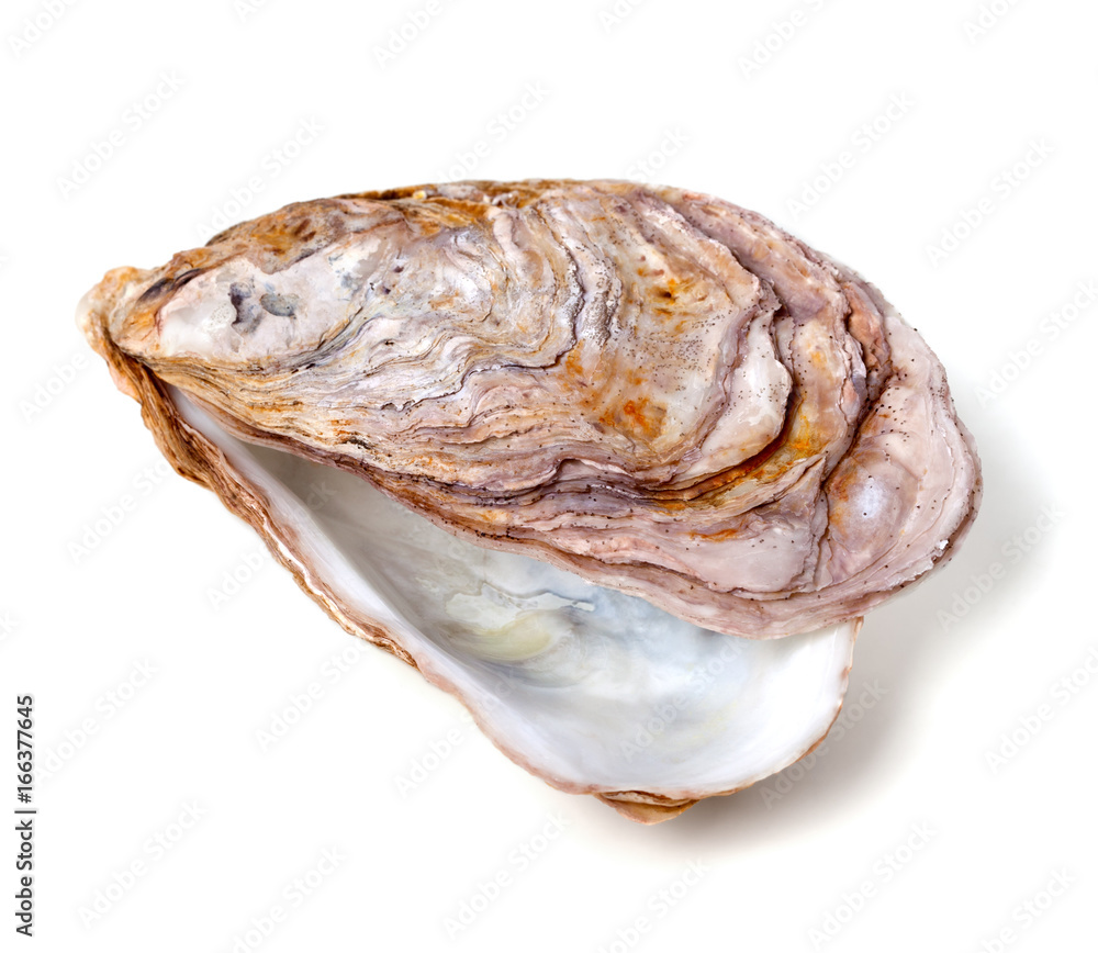 Empty seashell from oyster