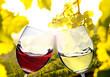 Leinwandbild Motiv Weinverkostung - Anstoßen mit  Weißwein und Rotwein im Weinberg