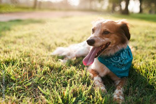 Cute dog at Park