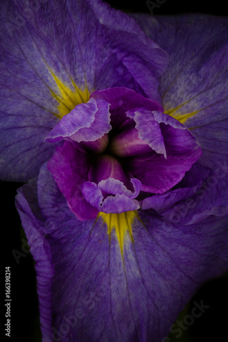 Iris from above