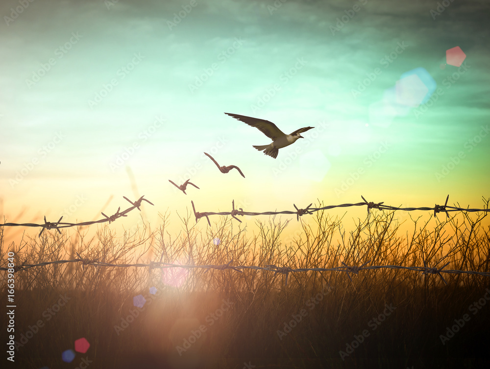 Fototapeta World environment day concept: Silhouette of bird flying and barbed wire at sunset background