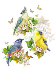Panel Szklany Polecane pretty collection of birds on apple blossom and butterflies. watercolor painting