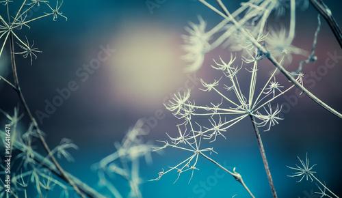 jesieni-lub-zimy-krajobraz-naturalny-tlo-z-suchymi-kwiatami-selekcyjna-ostrosc