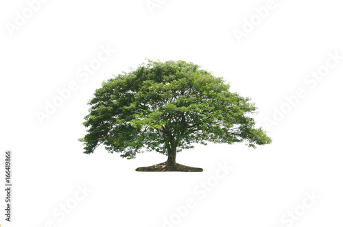 Photo Stands Bonsai Tree of isolate