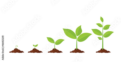 Phases plant growing. Fototapet