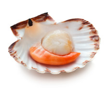 Raw Scallop Isolated On White ...