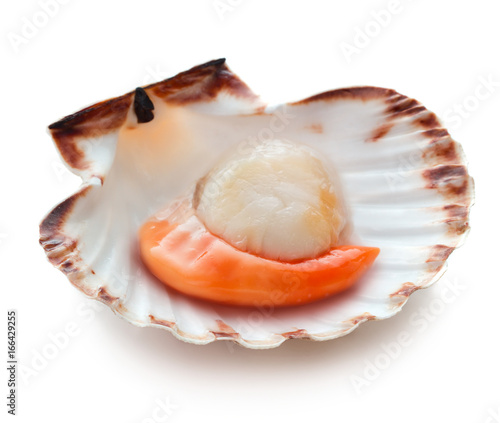Poster Coquillage Raw scallop isolated on white background