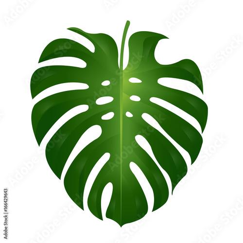 Fotobehang Draw Monstera Leaf