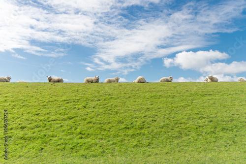 Leinwand Poster Schafe auf einem Deich