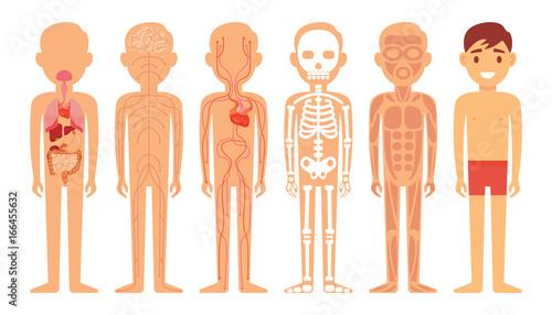Astounding Different Systems Of Human Body Diagram Illustration Kaufen Sie Wiring Digital Resources Instshebarightsorg
