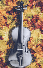 Black And White Violin On Color Leaves, Music Background