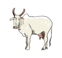 Indian Holy Cow Hand Drawn Icon Isolated On White Background Vector Illustration. Indian Ethnic Culture Element.
