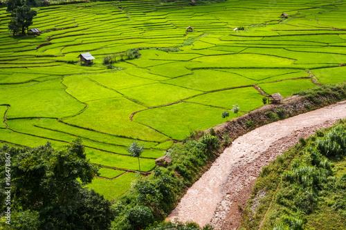 Fotobehang Rijstvelden Green Terraces rice field, a beautiful natural beauty on mountain in Nan,Khun Nan Rice Terraces, Boklua Nan Province, Thailand
