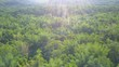 Aerial View from a drone. Flying over the beautiful sunny forest trees