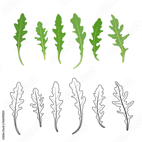 Set of arugula (rucola, rocket salad) fresh green leaves and outlines isolated over white background Canvas Print