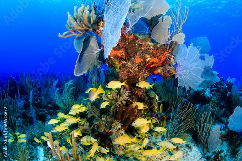 Tuinposter Koraalriffen Lemon Wall