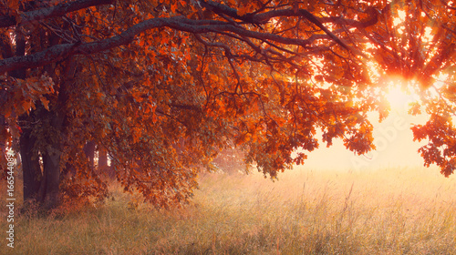 Foto op Canvas Herfst Sunny autumn scene. Hallowing time background.
