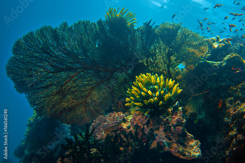 Staande foto Koraalriffen Beautiful corals underwater on blue marine background