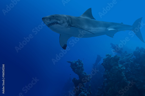 Obraz na dibondzie (fotoboard) Rekin w głębokiej wodzie
