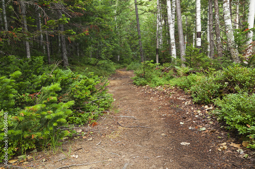 Foto op Canvas Weg in bos path in the woods, a wooded park, taiga path