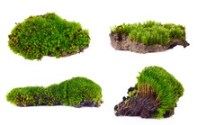 Green Moss Set Isolated On Whi...
