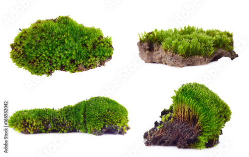 Fotografia, Obraz Green moss set isolated on white bakground