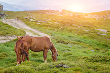 Horses In The Green Foothills ...