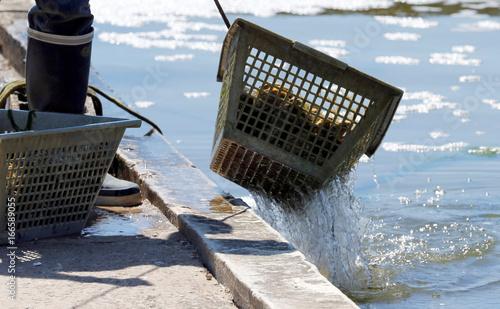 aquaculturist