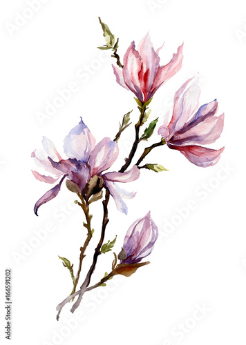 rozowa-magnolia-kwitnie-na-galazce-pojedynczo-na-bialym