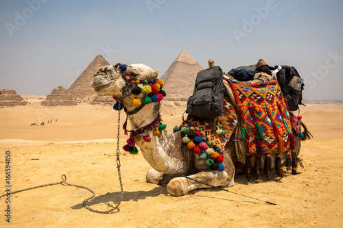 Tuinposter Kameel The Great pyramid with camel
