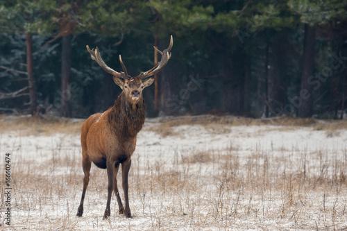 horn wo am deer einen mann besten kennenlernen single  Morris: One-antlered deer not that uncommon The Mercury News.