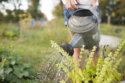 Fotobehang Tuin A Young Girl Waters Her Garden In Fort Langley