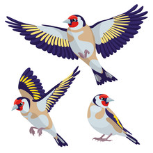 Goldfinch On White Background / There Are One Sitting Goldfinch And Two Flying Goldfinches In Cartoon Style