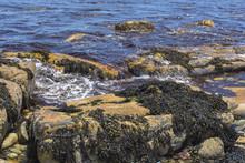 Kelp On Rocks Coastline