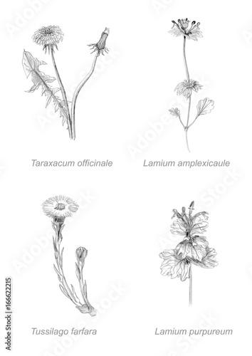 Fototapeta botanical set of flowers drawing obraz na płótnie