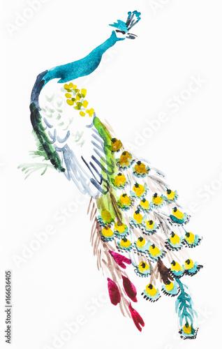 obraz PCV peacock on white paper