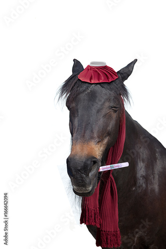 Fotografia  ill horse with thermometer have fever
